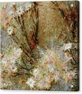 Daisy A Day 22 Acrylic Print by Julie Lueders
