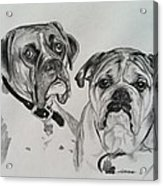 Daisy And Duke Acrylic Print