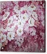 Daisy Blush Acrylic Print