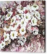 Daisy Blush Remix Acrylic Print