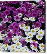 Daisy Bouquet From Dublin  Acrylic Print