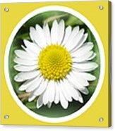 Daisy Closeup Acrylic Print