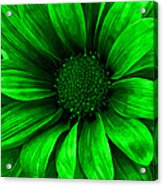 Daisy Daisy Neon Green Acrylic Print