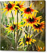 Daisy Do Acrylic Print