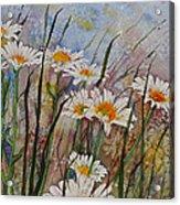 Daisy Dreams Acrylic Print