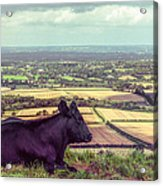 Daisy Enjoys The View From Truleigh Hill Acrylic Print