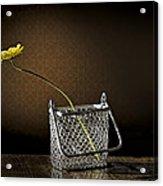 Daisy In A Chain Basket Acrylic Print