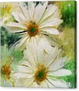Daisy Love Acrylic Print