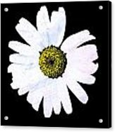 Daisy On Black Acrylic Print