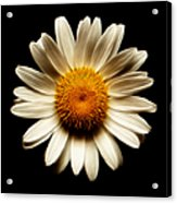 Daisy On Black Square Fractal Acrylic Print
