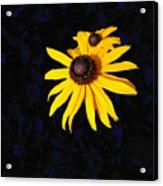 Daisy On Dark Blue Acrylic Print
