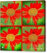 Daisy Perspective Collage Acrylic Print