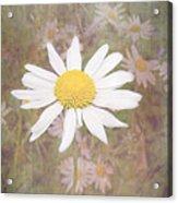 Daisy Textured Acrylic Print