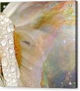 Daisy With Hubble Cosmos Acrylic Print