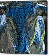 Dallas Pioneer Plaza Cattle Acrylic Print