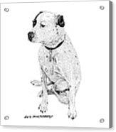 Dalmatian On Guard  Acrylic Print