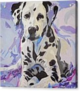 Dalmatian Puppy Acrylic Print