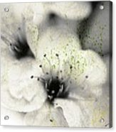 Damaged Blooms Acrylic Print