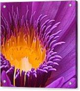 Dance In The Garden Acrylic Print