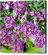Dance Of Flowers Acrylic Print