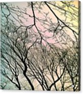 Dance Of Spring Acrylic Print