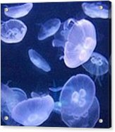 Dance Of The Jelly Fish Acrylic Print
