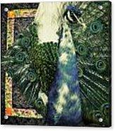Dance Of The Peacock Acrylic Print