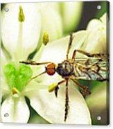 Dancefly On Onion Flower Acrylic Print by Walter Klockers