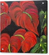 Dancing Anthuriums Acrylic Print