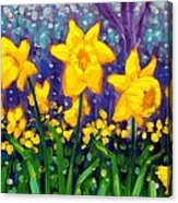 Dancing Daffodils    Cropped Acrylic Print