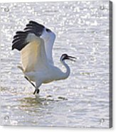 Dancing For My Lady Acrylic Print