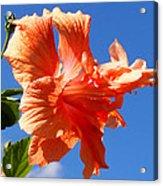 Dancing Hibiscus Acrylic Print