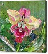 Dancing Orchid I Acrylic Print