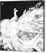Dancing Peacock Black Acrylic Print