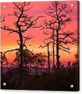 Dancing Trees Into The Fire Acrylic Print
