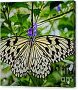 Dancing With Butterflies Acrylic Print