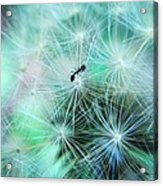 Dandelion Ant Acrylic Print