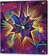 Dandelion Fireworks 003 Acrylic Print