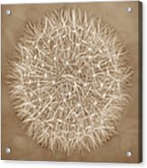 Dandelion Marco Abstract Brown Acrylic Print