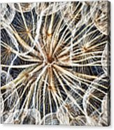 Dandelion Acrylic Print by Stelios Kleanthous