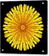 Dandelion V Flower Mandala White Acrylic Print
