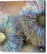 Dandelions Acrylic Print by John Christopher Bradley