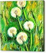 Dandelions Acrylic Print by Zaira Dzhaubaeva