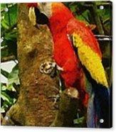 Danse Macaw Acrylic Print