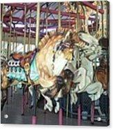 Dapled Pony Acrylic Print
