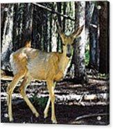 Dappled In Light Acrylic Print