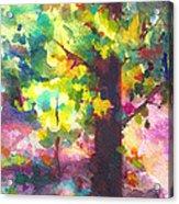 Dappled - Light Through Tree Canopy Acrylic Print