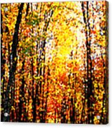 Dappled Sunlight Acrylic Print