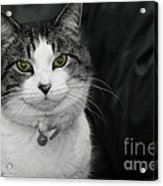Dare To Look Into My Green Eyes Acrylic Print