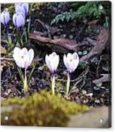 Daring To Grow Acrylic Print
